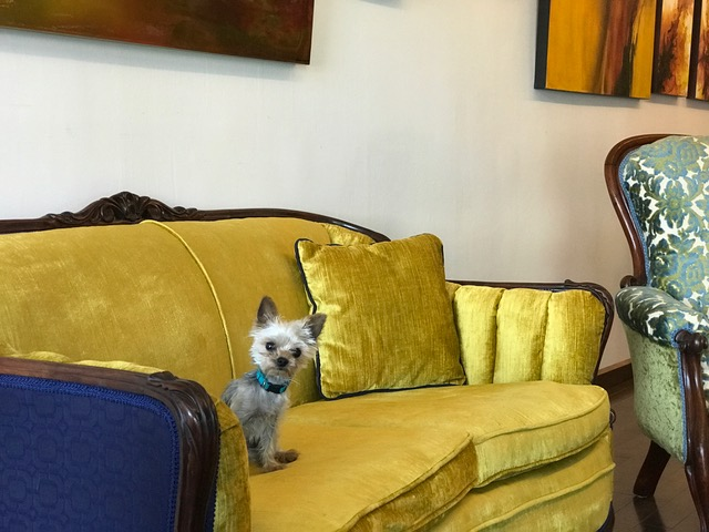 Coco the Memory Castings Studio Dog, Looking Adorable, As usual